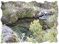 Ca?uela, helechos y musgos en el Cerro Chirripo