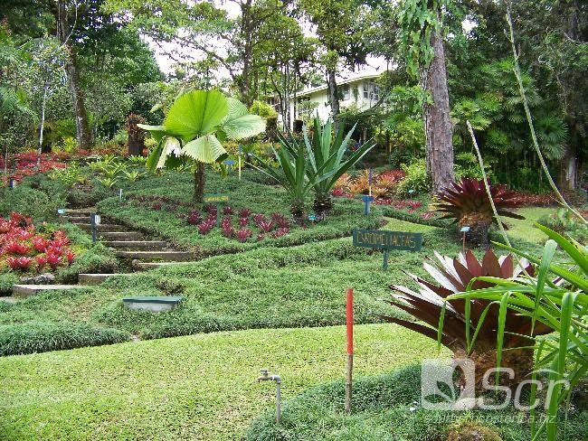 Jardines roberth y caterine wilson san vito for Jardines costa rica